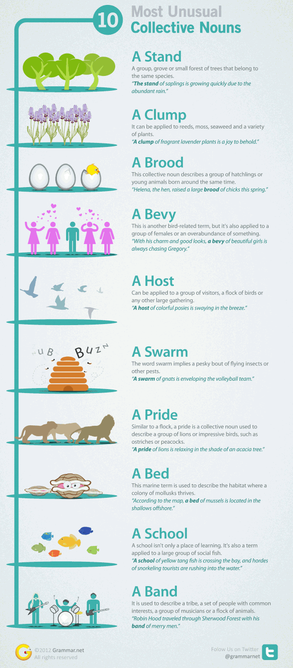 Collective Nouns Infographic